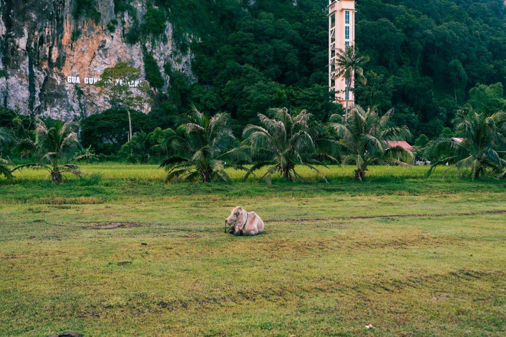 Paddy field museum Kedah Alor Setar