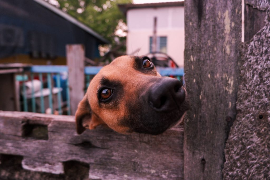 A dog poking out of his wooden house