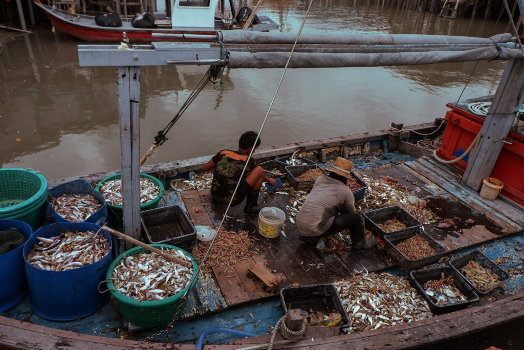 Firshermen on their boat sorting their catch